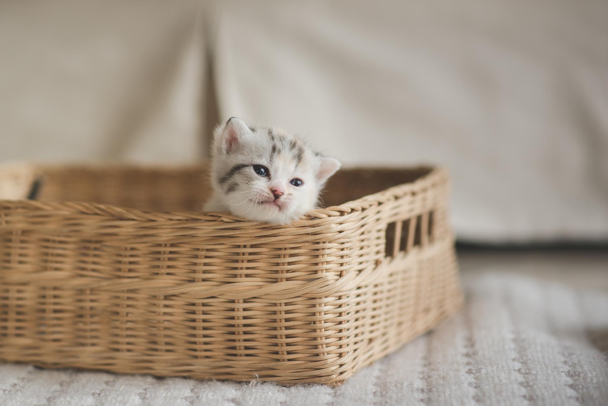 猫と一緒に引越しする方法と注意点